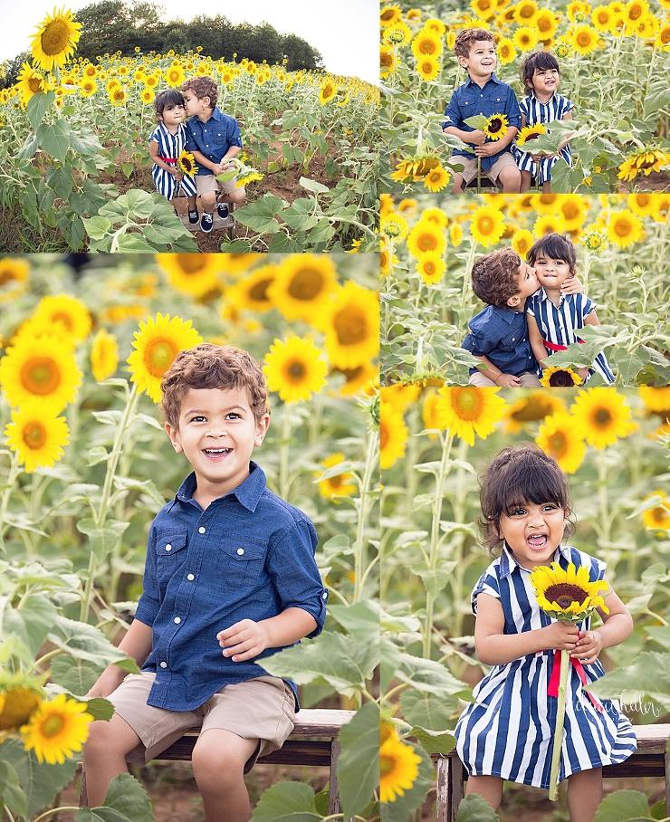Raleigh sunflowers photographer 9.jpg